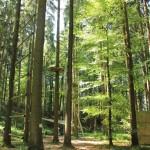 Parcours Abenteuerkletterpark Tannenbühl Bad Waldsee