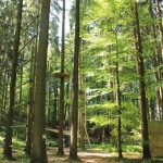 Parcours-Abenteuerkletterpark-Tannenbühl-Bad-Waldsee-150x150