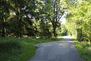 Riedstraße-und-Lichtung-im-Steinacher-Ried-Bad-Waldsee