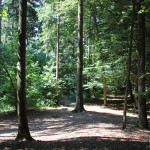 Wald des Grillplatzes Gaisbeuren