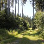 Wander- und Radweg Waldlehrpfad Tannenbühl