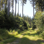 Wander-und-Radweg-Waldlehrpfad-Tannenbühl