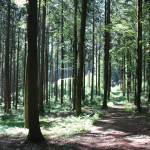 Wanderpfad-Waldlehrpfad-Tannenbühl-im-Wald