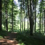 Wanderpfad Waldlehrpfad Tannenbühl unbefestigt