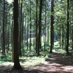 Wanderpfad Waldlehrpfad Tannenbühl im Wald