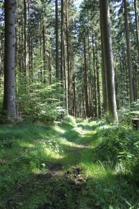 Wanderpflad matischig im Tannenbühl Bad Waldsee