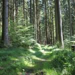 Wanderpflad-matischig-im-Tannenbühl-Bad-Waldsee