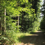 Wanderweg Tannenbühl Bad Waldsee