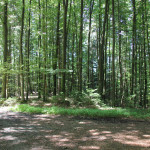 Weggabelung Waldlehrpfad Tannenbühl
