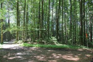 Weggabelung-Waldlehrpfad-Tannenbühl