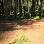 gefälle-Tannenbühl-Bad-Waldsee