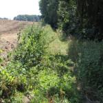 12-Unwegsames-Gelände-am-Waldrand-Baindter-Wald