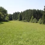 13-Wiesen-am-Waldrand-fast-wie-im-Allgäu