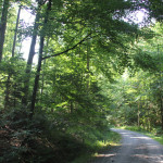 302 Bergauf in den Mochenwangener Wald