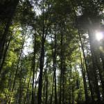 303 Mochenwangener Wald