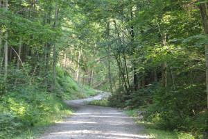 304 Wanderweg Mochenwangener Wald