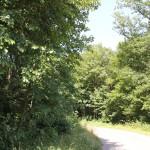 40-Baindter-Wald-Rückweg-nach-Kümmerazhofen1