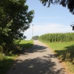 42-Wanderweg-zurück-von-Kümmerazhofen-nach-Reute-