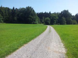 501 Weg durch Mochenwangener Wald und Lichtungen