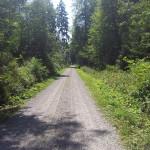 503 Feldweg durch Mochenwangner Wald