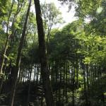 Ausblick Wald zwischen Alttann Wolfegg