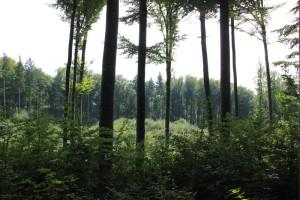 Aussicht Wald Wolfegg Alttann
