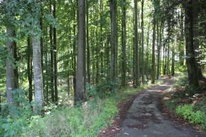 Erste Meter im Wald zwischen Wolfegg und Alttann