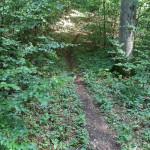 Streckenanstieg Wald Wolfegg-Alttann
