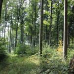 Streckenverlauf Alttann Wolfegg Wald