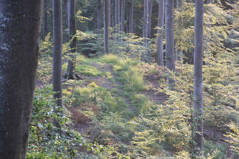 Trampelpfad Mountainbike Strecke bei Bad Waldsee