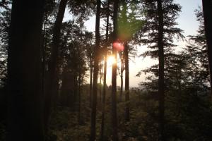 Wald zwischen Haisterkirch und Bad Waldsee