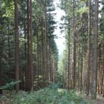 Bergab vom Sendemast Mennisweiler Bad Waldsee
