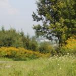 Blick vom Sendemast auf Mennisweiler