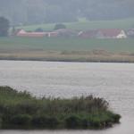 Rohrsee-Vögel-auf-Sandbank