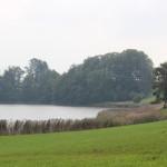 Vogelfreistätte Rohrsee Ufer