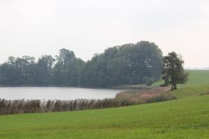 Vogelfreistätte-Rohrsee-Ufer