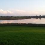 Vogelfreistätte Rohrsee Wolkenreflektion im Wasser