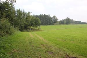 Abstieg Tannenbühl Haidgauer Heide