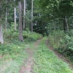 Tannenbühl Wanderweg