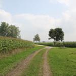 Haidgauer Heide Wanderweg vor Straße