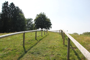 Weg zur Schillerlinde in Alttann