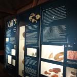 Erklärungstafeln Römermuseum