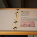 Kelten im Römermuseum