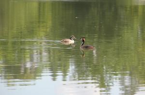 Fauna-Schloßsee-Bad-Waldsee