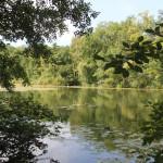 Flora-Fauna-Schloßsee-Bad-Waldsee