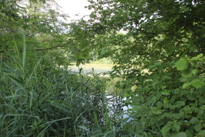 Gestrüpp-Schloßsee-Bad-Waldsee