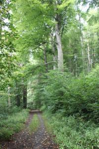 Wanderweg bei Wolfegg