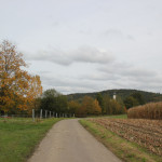 Weg zum Lindenweiher