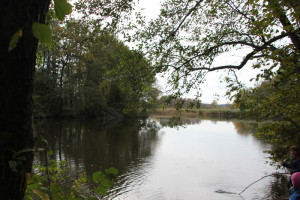 Lindenweiher Naturschutzgebiet
