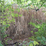 Sumpfiges Ufer Lindenweiher